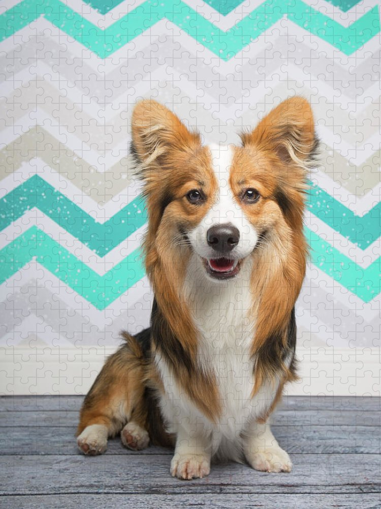 Pets Puzzle featuring the photograph Portrait Of A Fluffy Corgi by Holly Hildreth