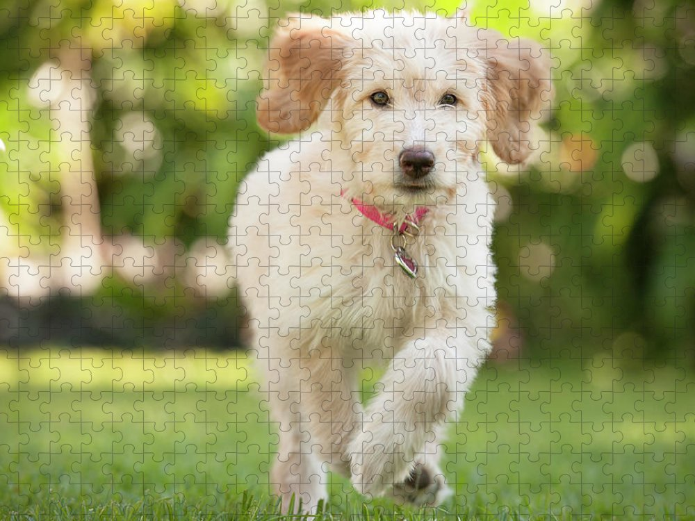 Pets Puzzle featuring the photograph Puppy Running Through The Grass by Chris Stein