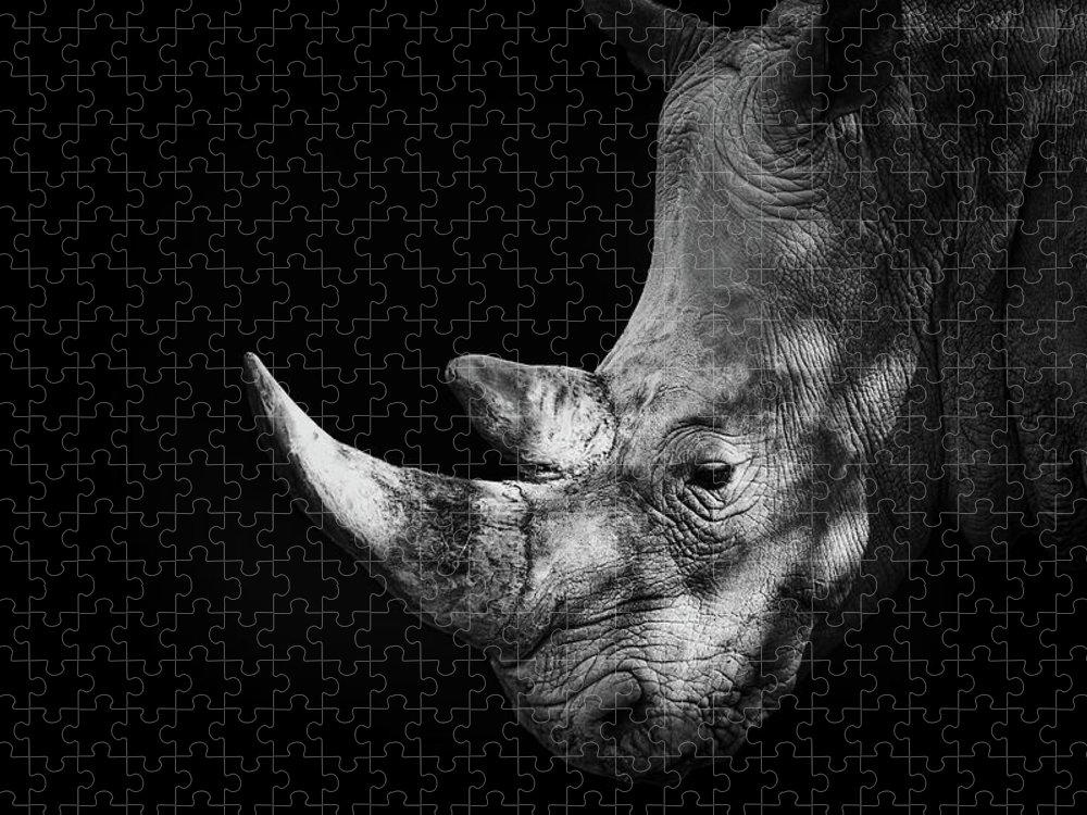 Horned Puzzle featuring the photograph Rhinoceros by Malcolm Macgregor