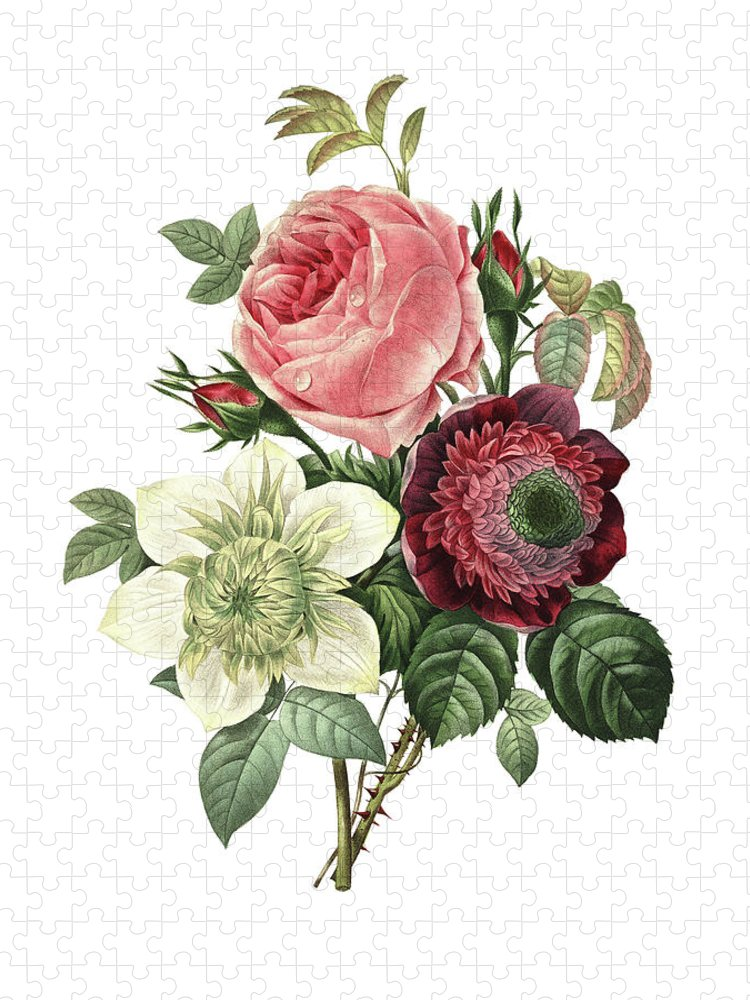 White Background Puzzle featuring the digital art Rose, Anemone And Clematis | Redoute by Nicoolay