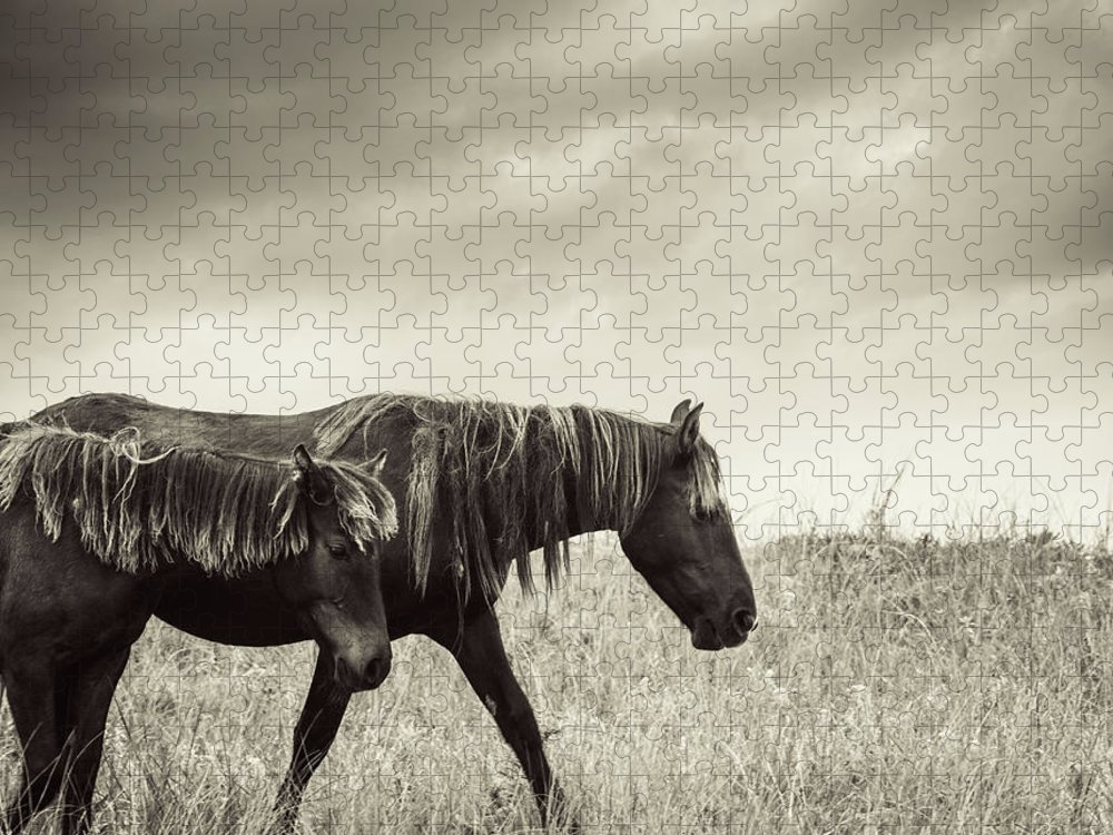 Horse Puzzle featuring the photograph Sable Island Horses by Jewelsy