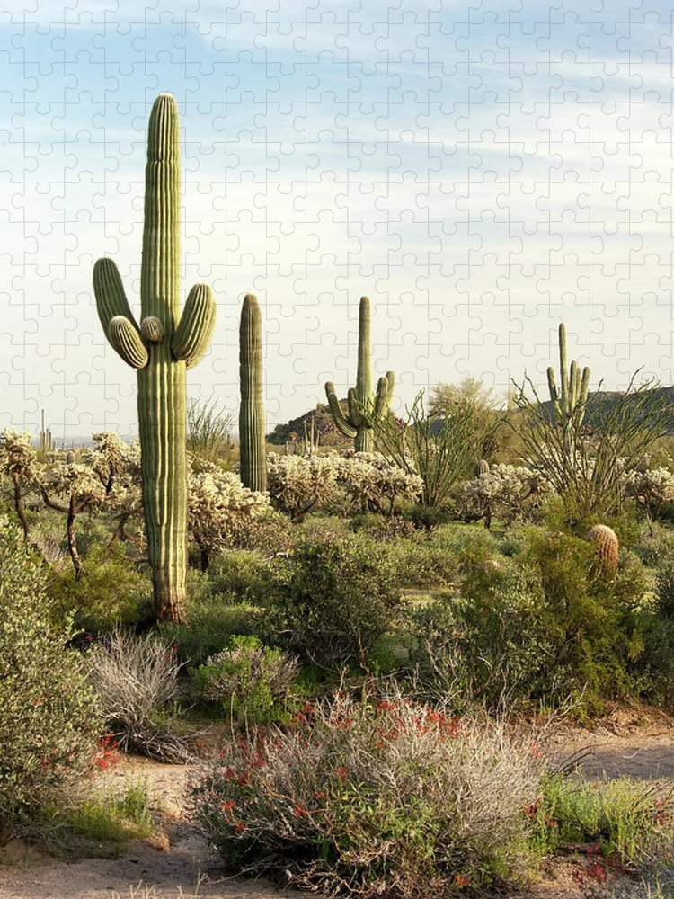 Saguaro Cactus Puzzle featuring the photograph Saguaro Cactus, Arizona,usa by Brian Stablyk