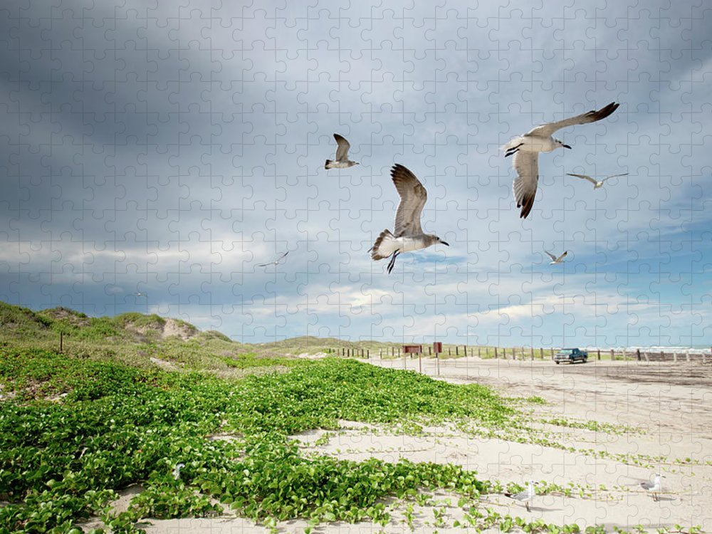 Scenics Puzzle featuring the photograph Seagulls In Flight At North Padre by Olga Melhiser Photography