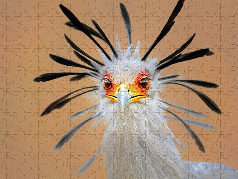 Bird Puzzle featuring the photograph Secretary bird portrait close-up head shot by Johan Swanepoel