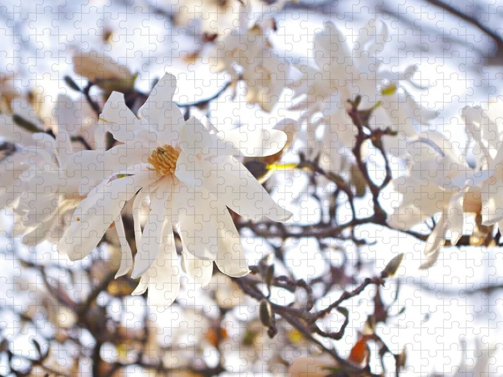 Magnolia Stellata Puzzle featuring the photograph Spring Flowers by Sharon Popek