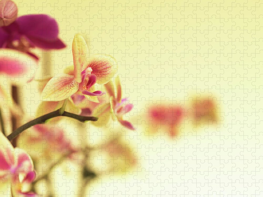 Purple Puzzle featuring the photograph Stem Of Orchids by Jlph