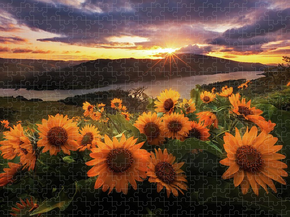 Outdoors Puzzle featuring the photograph Sunflower Field by Jeremy Cram Photography