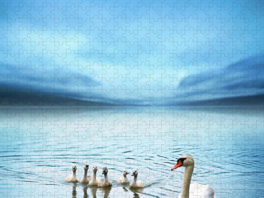 Scenics Puzzle featuring the photograph Swan Family On The Lake by Borchee