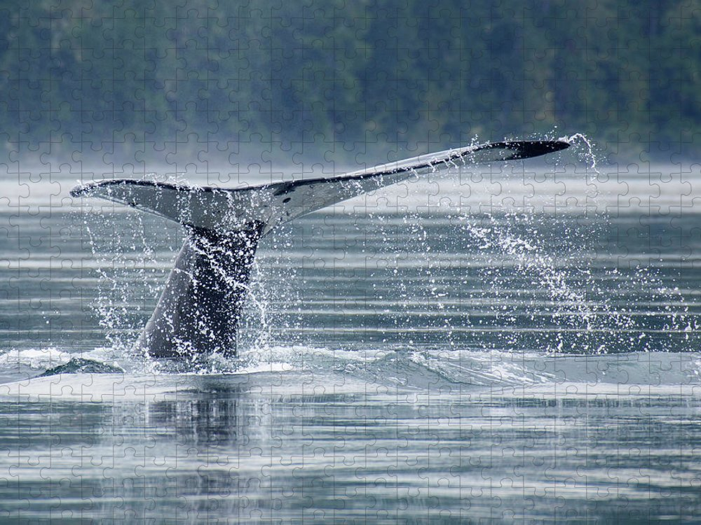 One Animal Puzzle featuring the photograph Tail Of Humpback Whale by Grant Faint