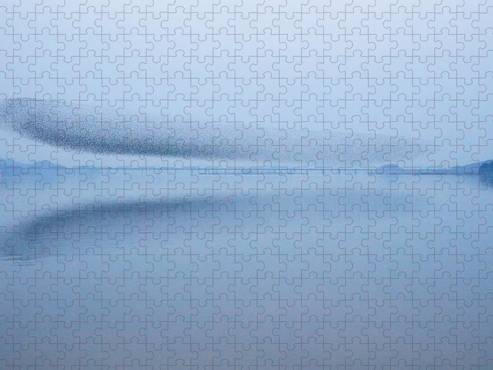 Scenics Puzzle featuring the photograph The Baikal Teals 2 by Penboy