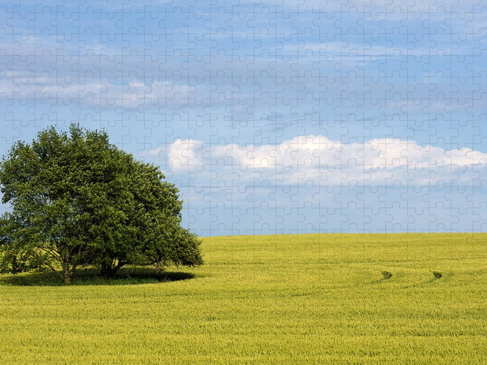 Grass Family Puzzle featuring the photograph Trees In Wheat Field by Simplycreativephotography