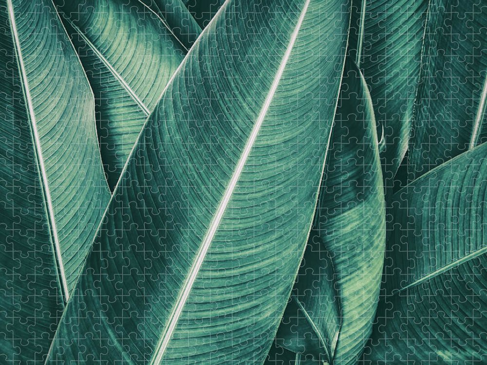 Spa Puzzle featuring the photograph Tropical Palm Leaf, Dark Green Toned by Pernsanitfoto