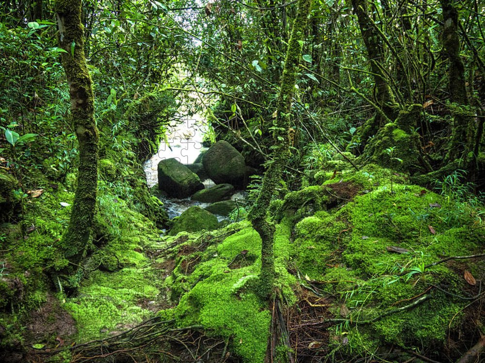 Tropical Rainforest Puzzle featuring the photograph Tropical Rain Forest At Auyantepuy by Apomares