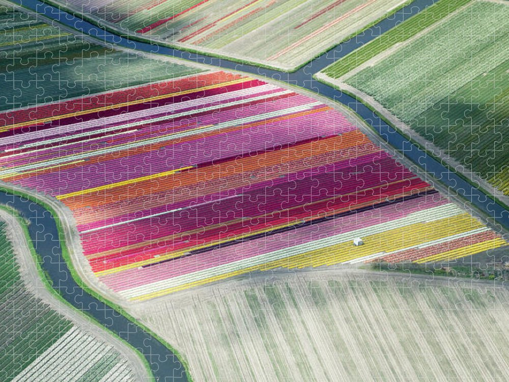 Curve Puzzle featuring the photograph Tulip Fields, Aerial View, South by Frans Sellies