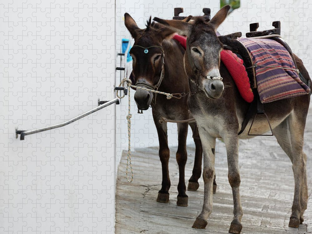 Working Animal Puzzle featuring the photograph Two Donkeys Tethered In The Street In by Martin Child