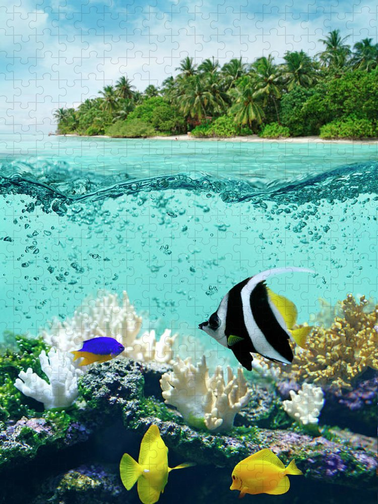 Bedrock Puzzle featuring the photograph Underwater Life In Tropical Sea by Narvikk