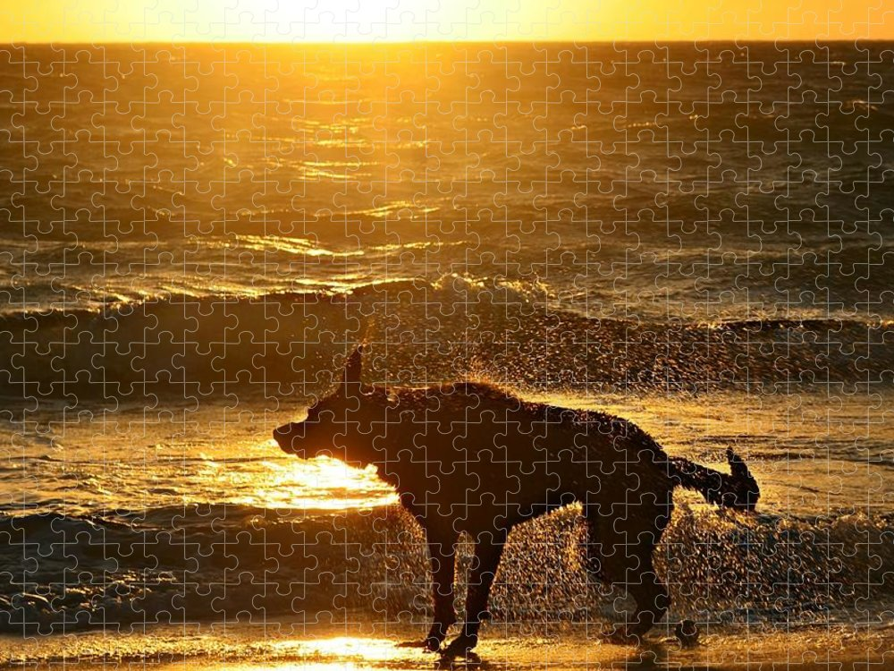 Pets Puzzle featuring the photograph Wet Shaking Dog At Beach by Autumnn