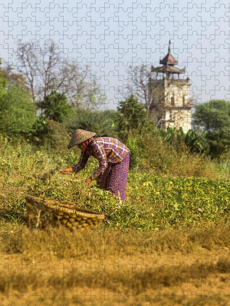 Three Quarter Length Puzzle featuring the photograph Woman Weeding At Nanmyin Tower by Merten Snijders