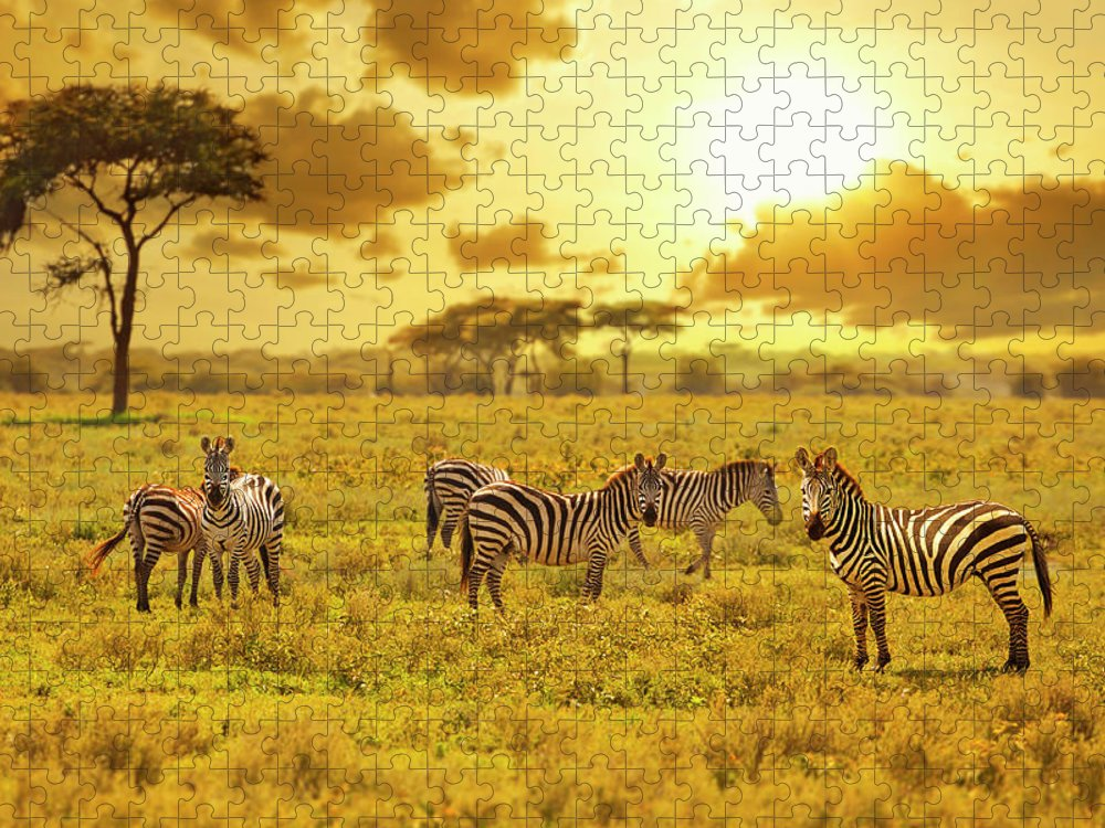 Kenya Puzzle featuring the photograph Zebra by Ugurhan