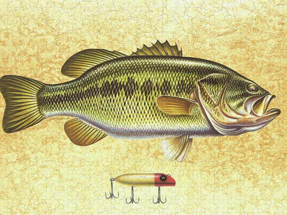 Bass Puzzle featuring the painting Antique Lure and Bass by JQ Licensing