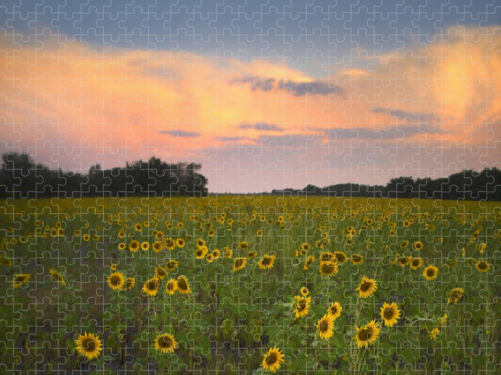 00176017 Puzzle featuring the photograph Common Sunflower Field Near Flint Hills by Tim Fitzharris