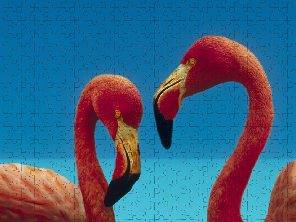 00172310 Puzzle featuring the photograph Greater Flamingo Courting Pair by Tim Fitzharris