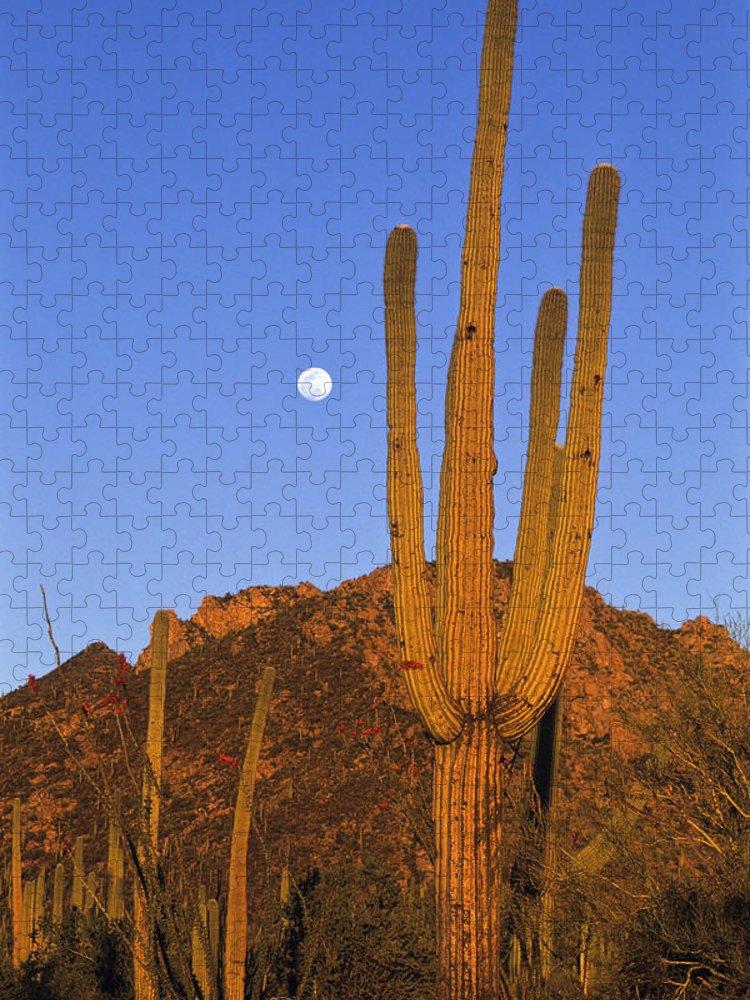 Mp Puzzle featuring the photograph Saguaro Carnegiea Gigantea Cactus by Konrad Wothe