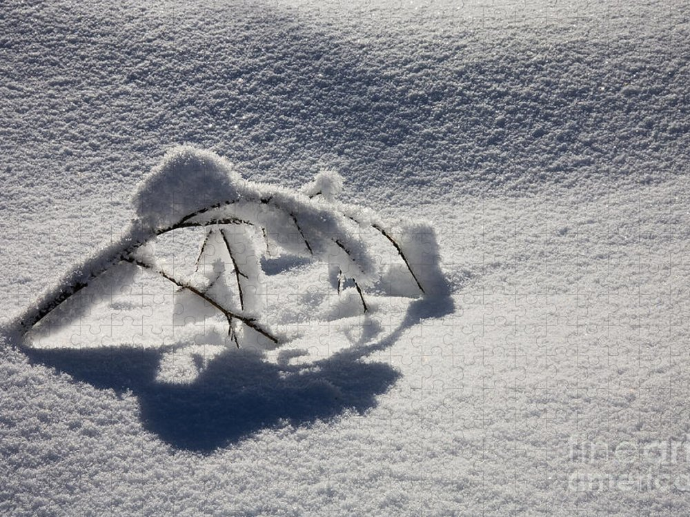 Sapling Puzzle featuring the photograph The Weight of Winter by Mike Dawson