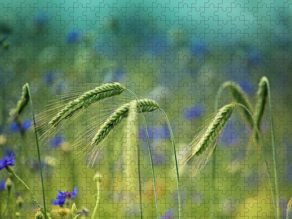 Wheat Puzzle featuring the photograph Wheat And Corn Flowers by Nailia Schwarz