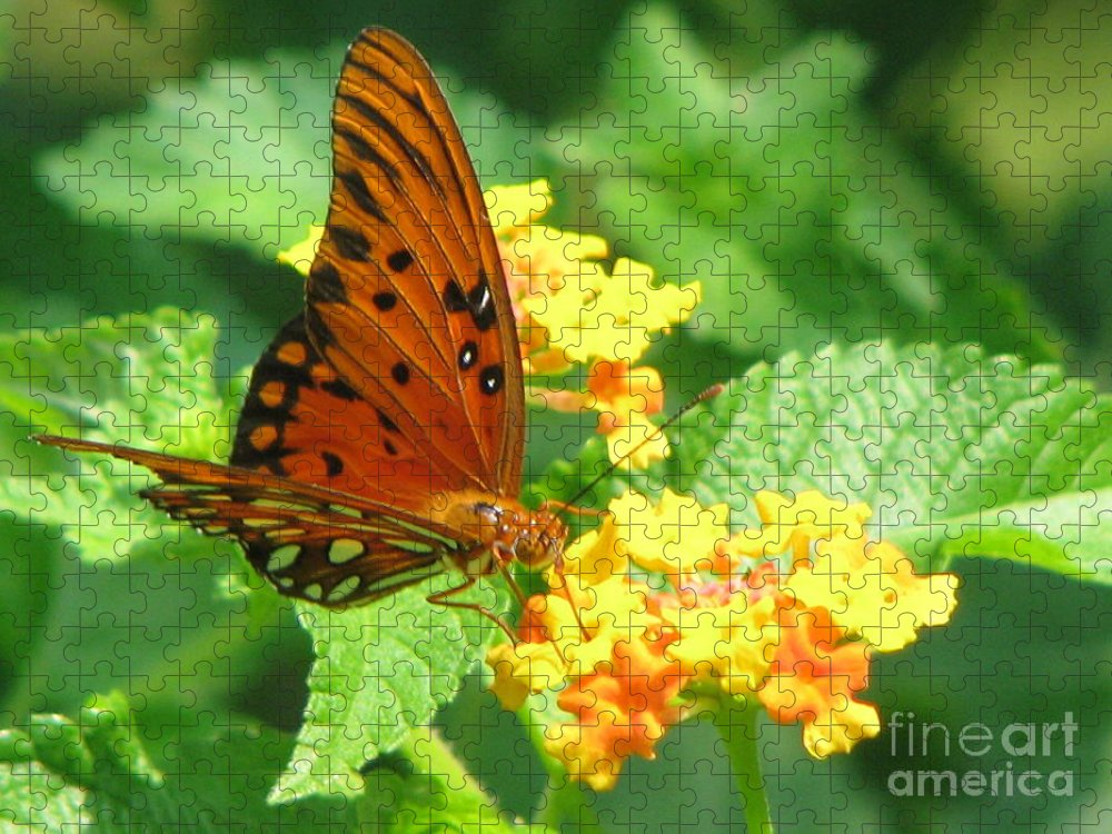 Butterfly Puzzle featuring the photograph Butterfly by Amanda Barcon