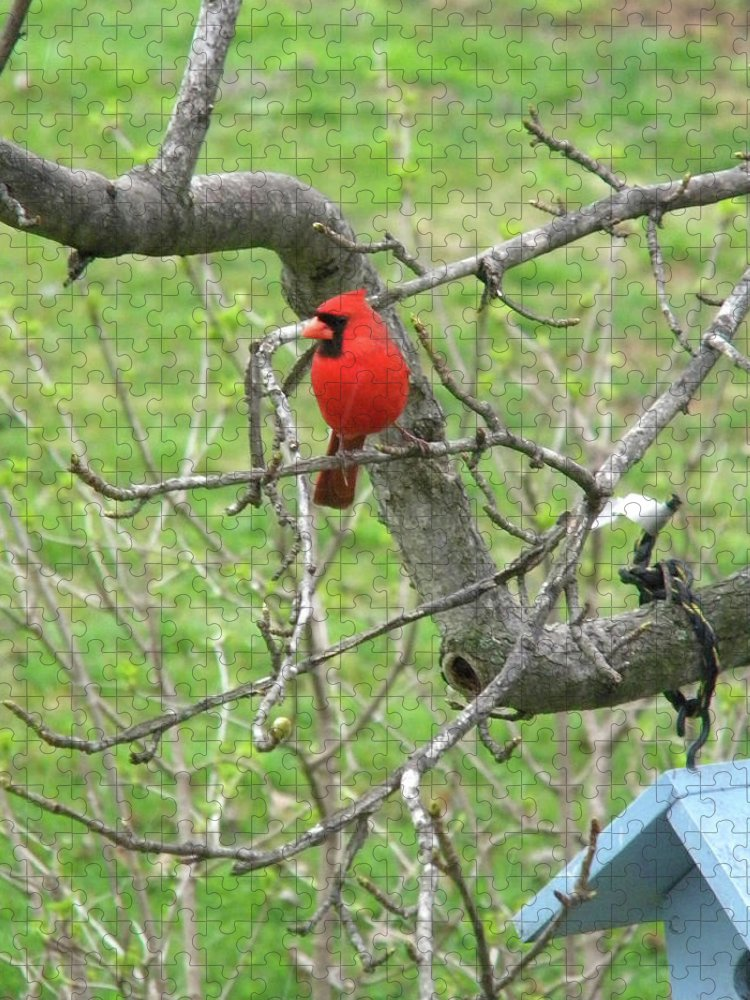 Cardinal Puzzle featuring the photograph Always With Us -Cardinals by Matthew Seufer