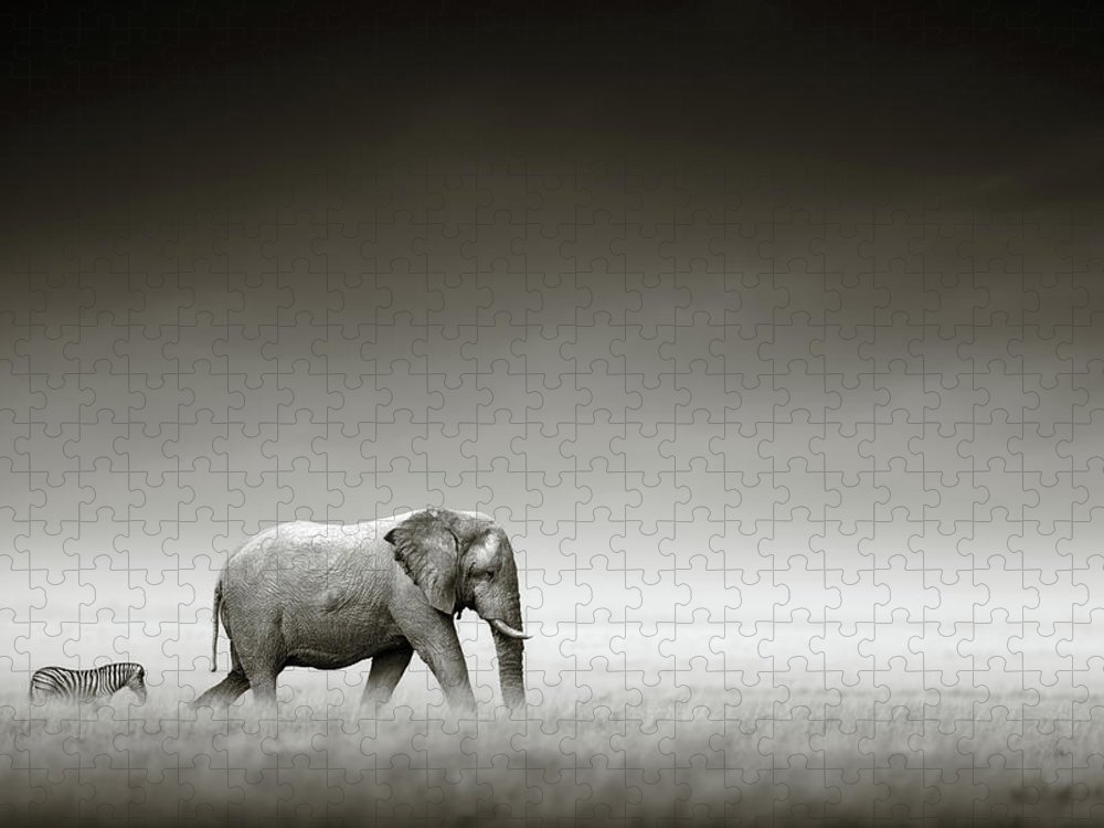 Elephant; Zebra; Behind; Follow; Huge; Big; Grass; Grassland; Field; Open; Plains; Grassfield; Dark; Sky; Together; Togetherness; Art; Artistic; Black; White; B&w; Monochrome; Image; African; Animal; Wildlife; Wild; Mammal; Animal; Two; Moody; Outdoor; Nature; Africa; Nobody; Photograph; Etosha; National; Park; Loxodonta; Africana; Walk; Namibia Puzzle featuring the photograph Elephant with zebra by Johan Swanepoel