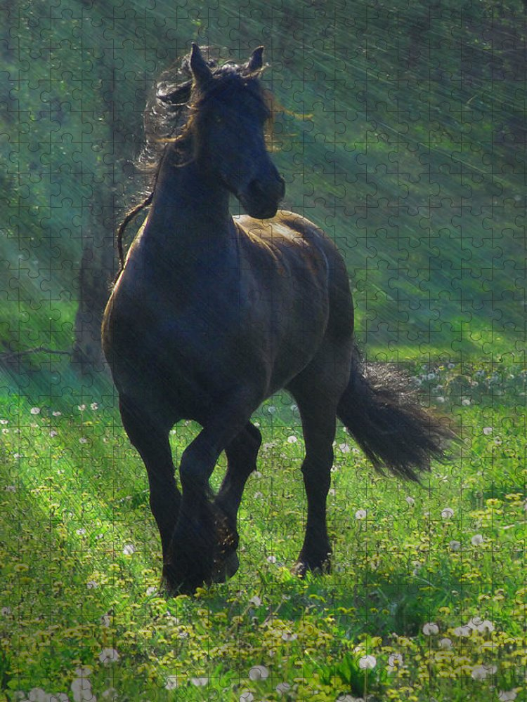 Horses Puzzle featuring the photograph Friesian Sun by Fran J Scott