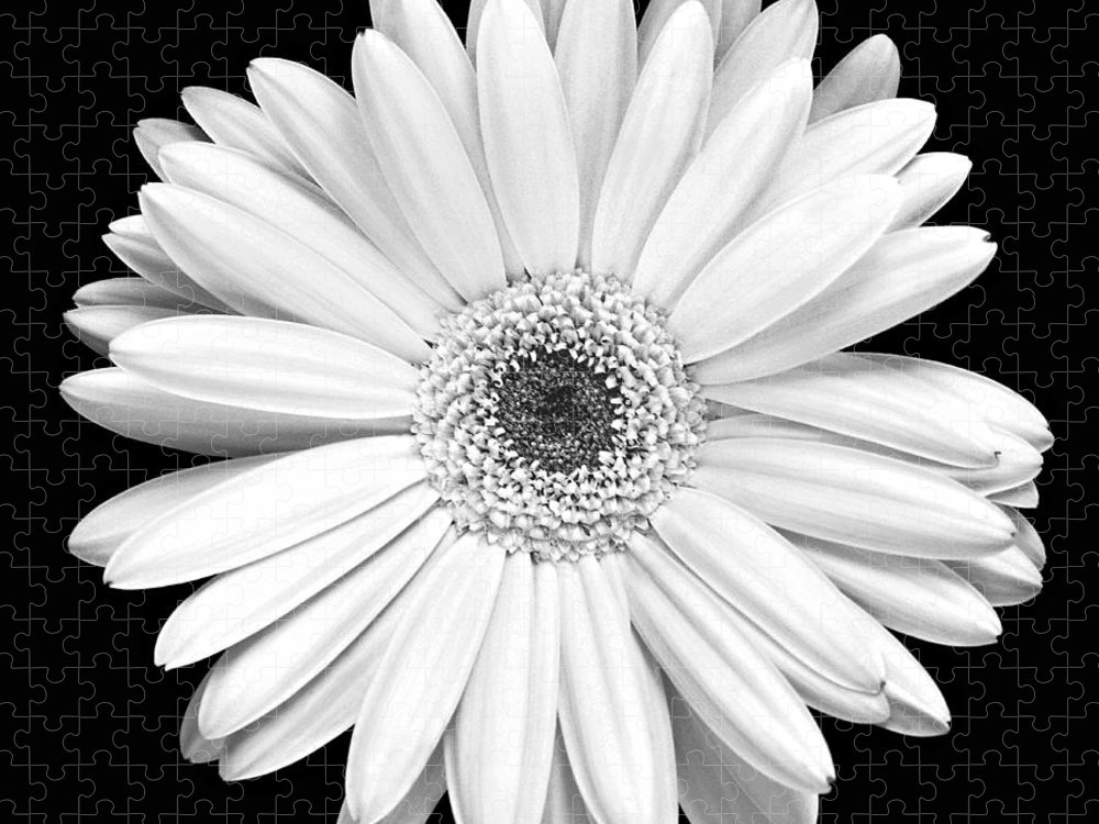 Gerber Puzzle featuring the photograph Single Gerbera Daisy by Marilyn Hunt