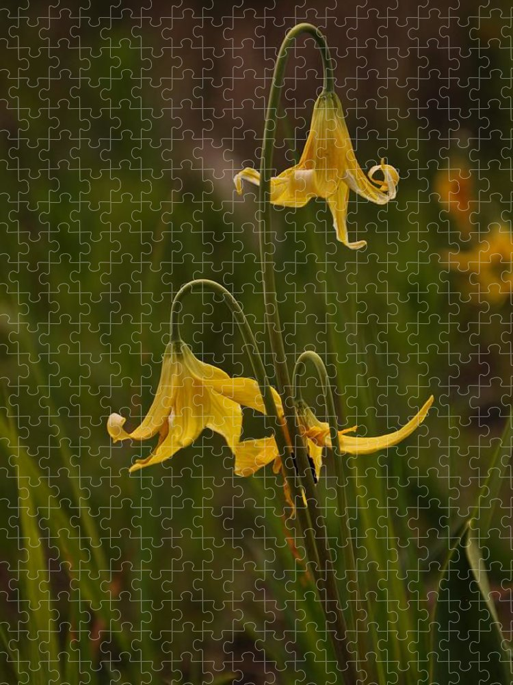 Yellowstone National Park Puzzle featuring the photograph Glacier Lilly by Frank Madia