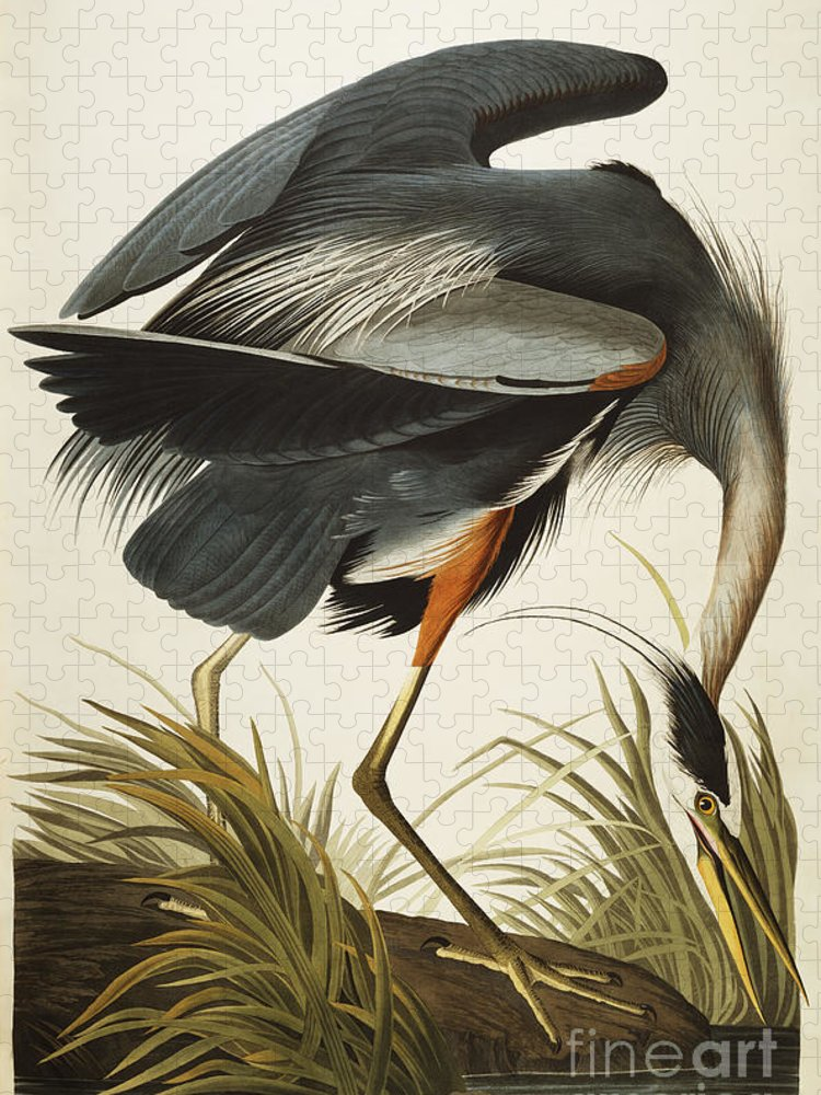Great Blue Heron Puzzle featuring the drawing Great Blue Heron by John James Audubon