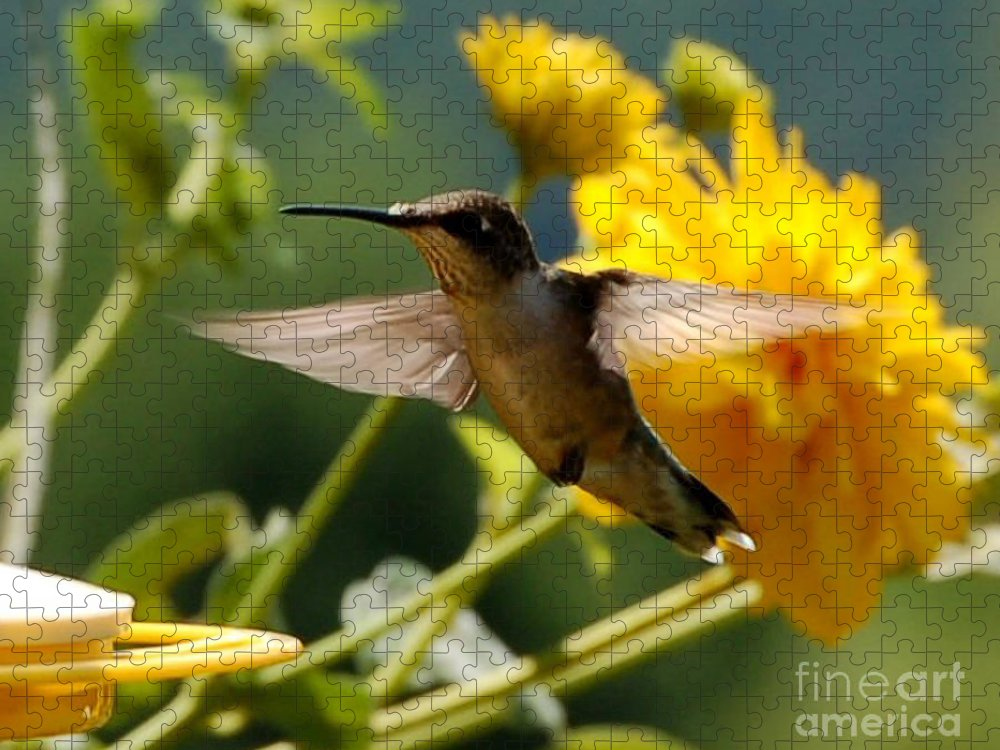 Diane Berry Puzzle featuring the photograph Hummer by Diane E Berry