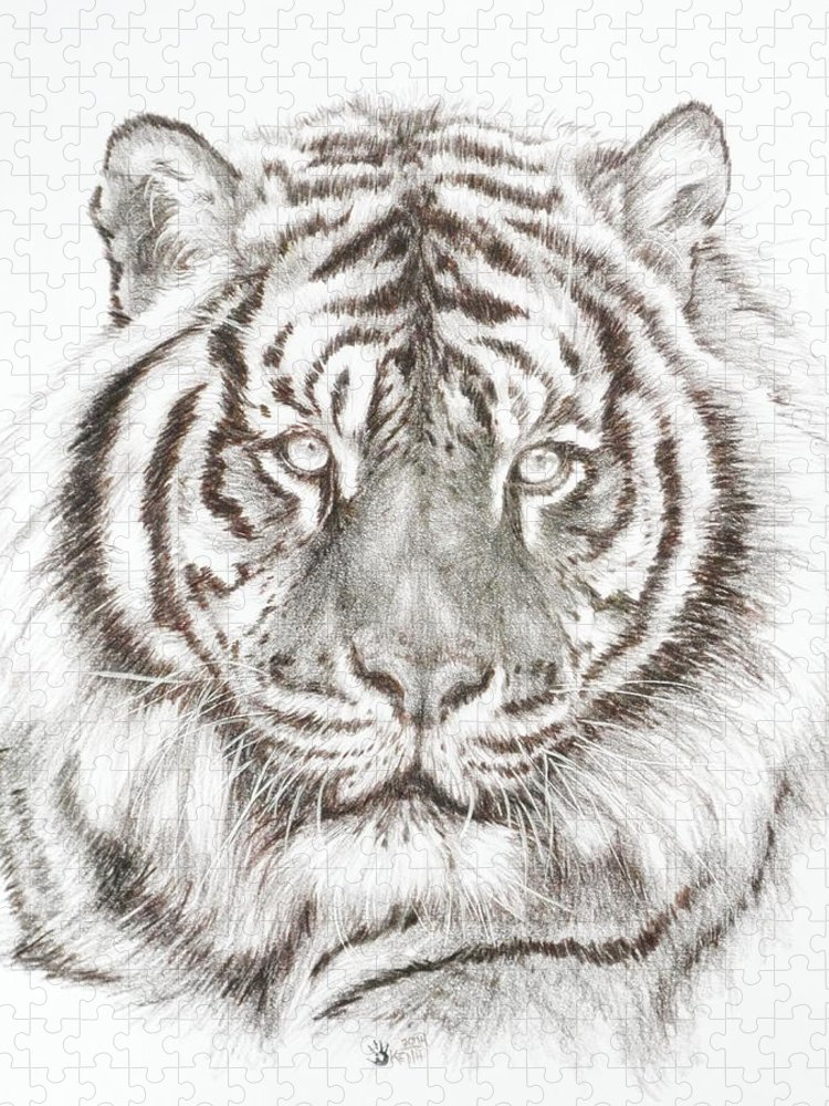 Big Cat Puzzle featuring the drawing Shimmer by Barbara Keith