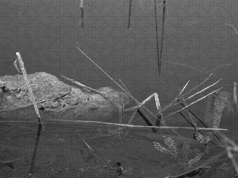 Black And White Puzzle featuring the photograph Spider In Water by Rob Hans