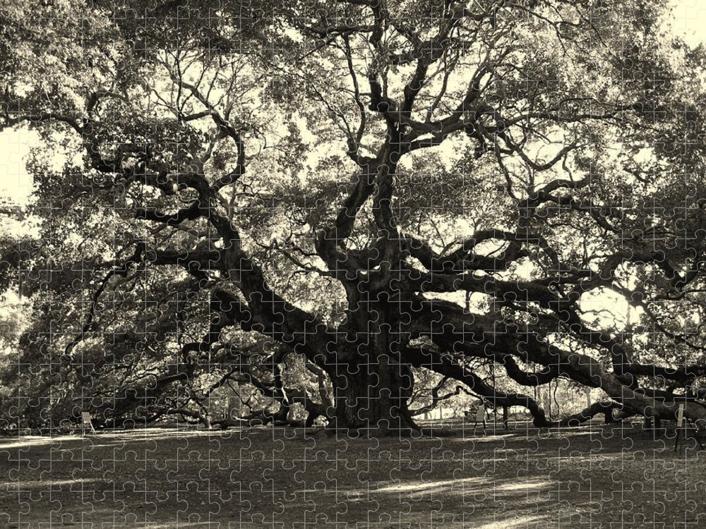 Angel Oak Puzzle featuring the photograph The Angel Oak by Susanne Van Hulst