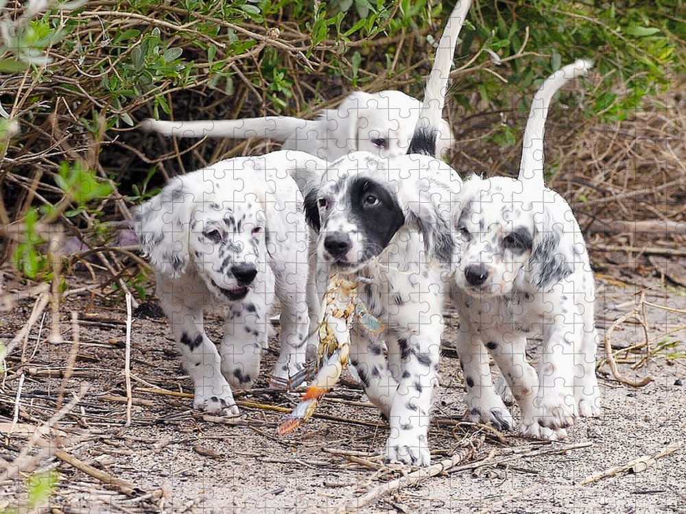 English Setter Puzzle featuring the photograph The Puppy's Prize by Scott Hansen