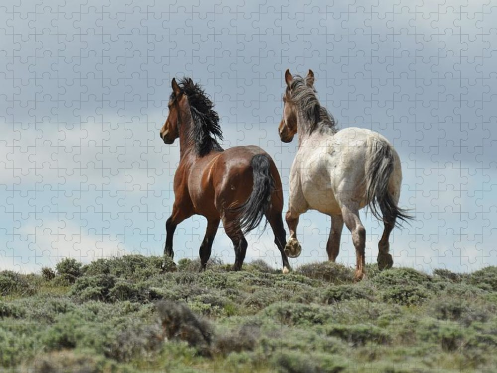Wild Horses Puzzle featuring the photograph Too Beautiful by Frank Madia