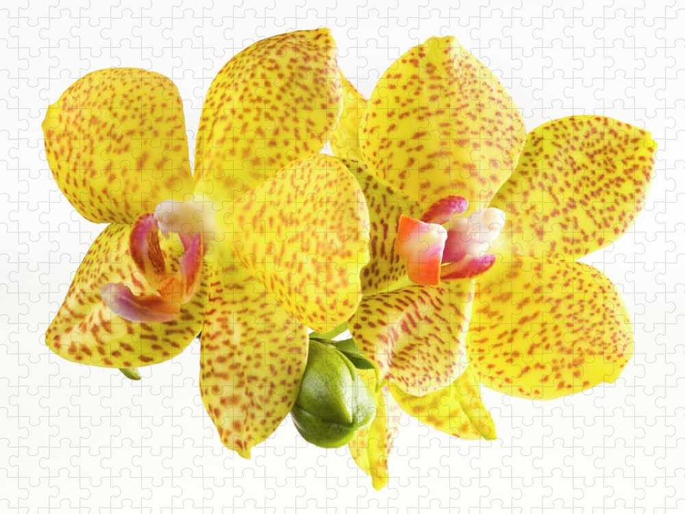 Thank You Puzzle featuring the photograph Beautiful Yellow Orchid On White by Digihelion