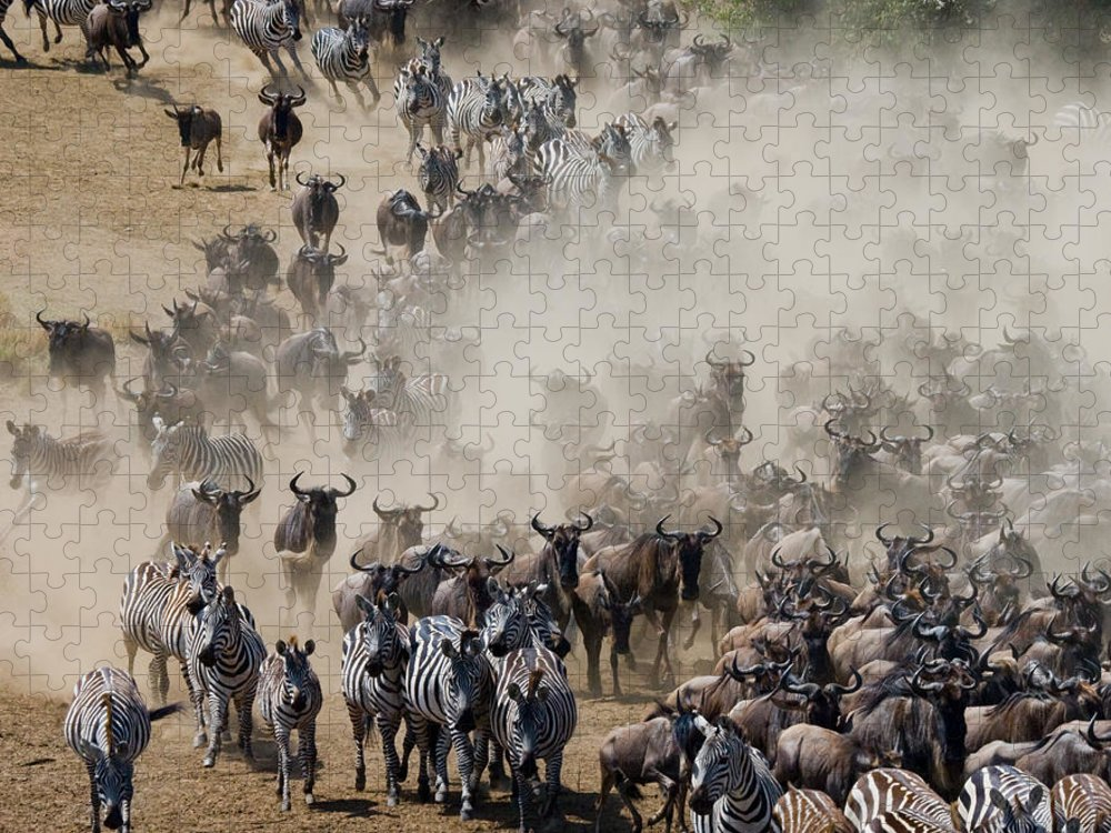 Jumping Puzzle featuring the photograph Big Herd Of Wildebeest Is About Mara by Gudkov Andrey