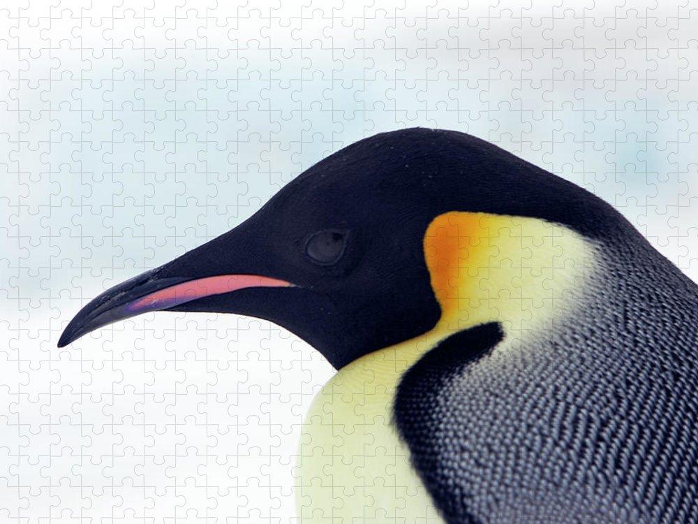 Emperor Penguin Puzzle featuring the photograph Emperor Penguin by Sylvain Cordier