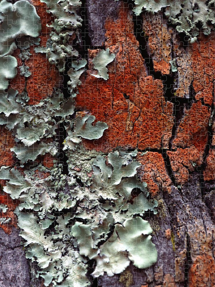 Built Structure Puzzle featuring the photograph Lichen On Tree Bark by John Foxx