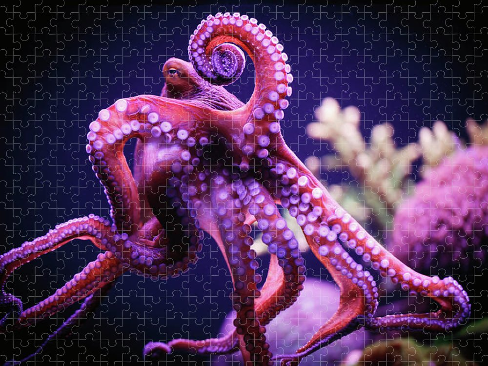 Underwater Puzzle featuring the photograph Octopus by Reynold Mainse / Design Pics
