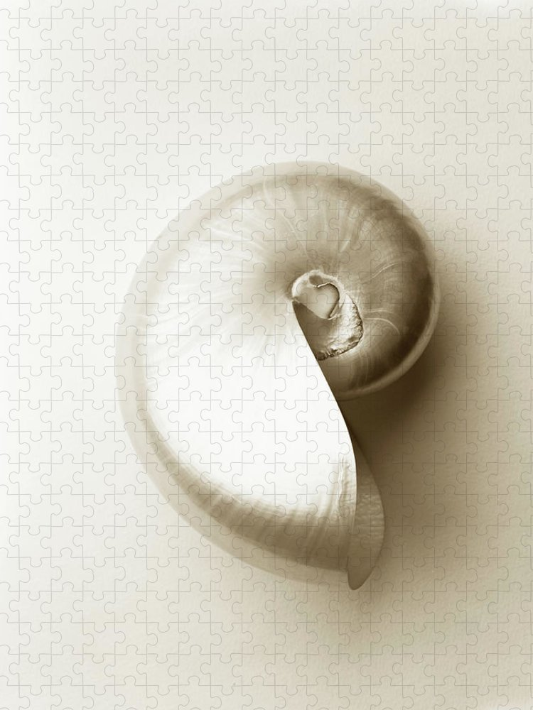 Animal Shell Puzzle featuring the photograph Pearlised Nautilus Sea Shell, Close-up by Finn Fox