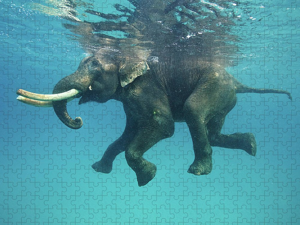 Underwater Puzzle featuring the photograph Swimming Elephant by Mike Korostelev Www.mkorostelev.com