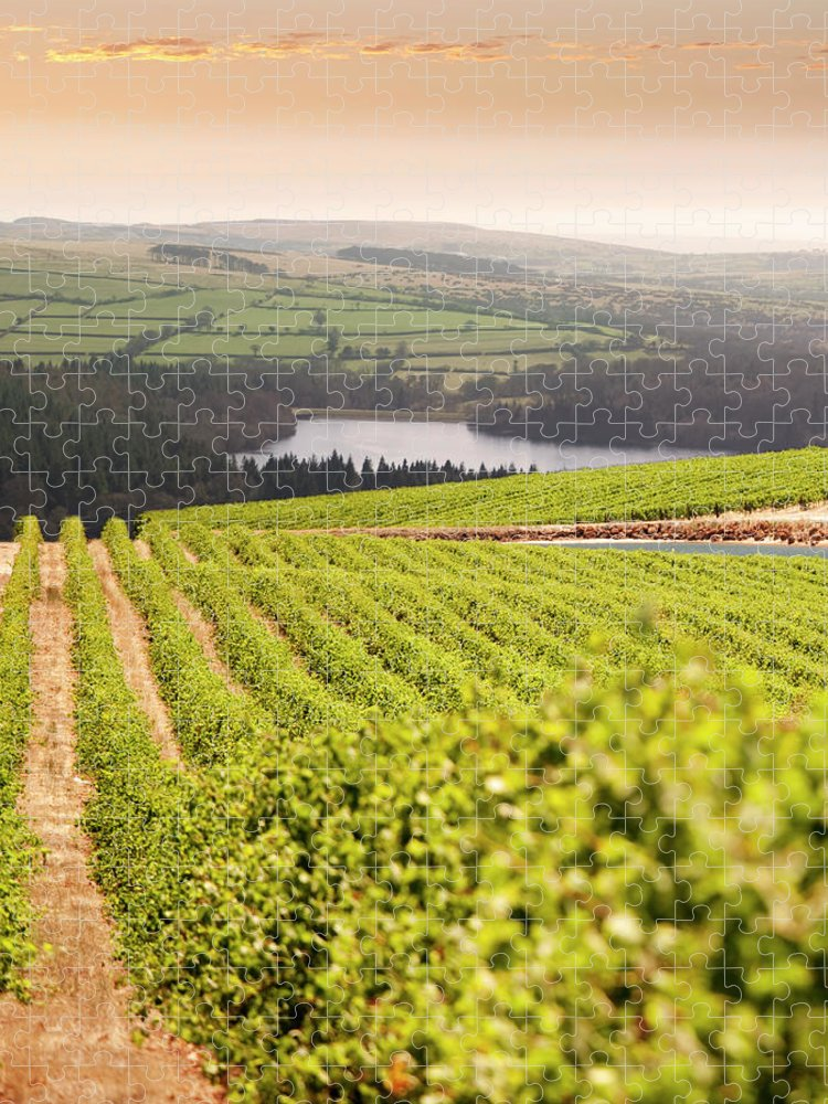 Scenics Puzzle featuring the photograph Vineyard At Sunset by Lockiecurrie